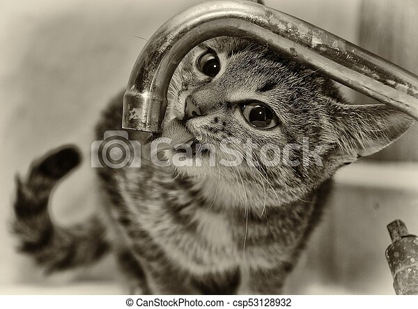 the cat wants to drink - csp53128932