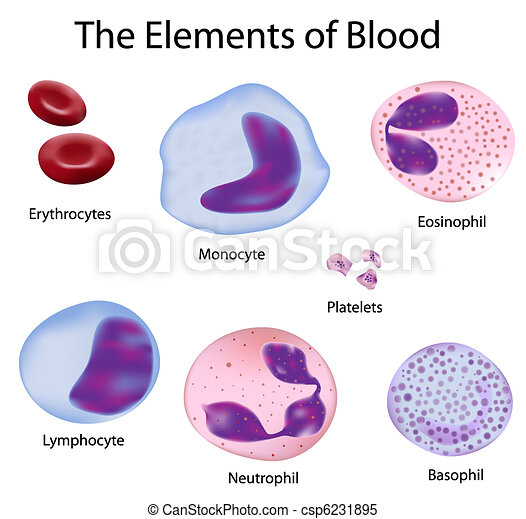 The cells of blood - csp6231895