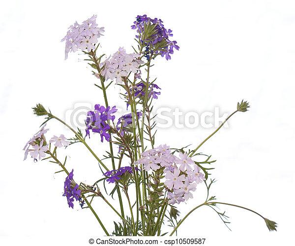 The decorative garden flower - csp10509587