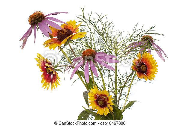 The decorative garden flowers - csp10467806