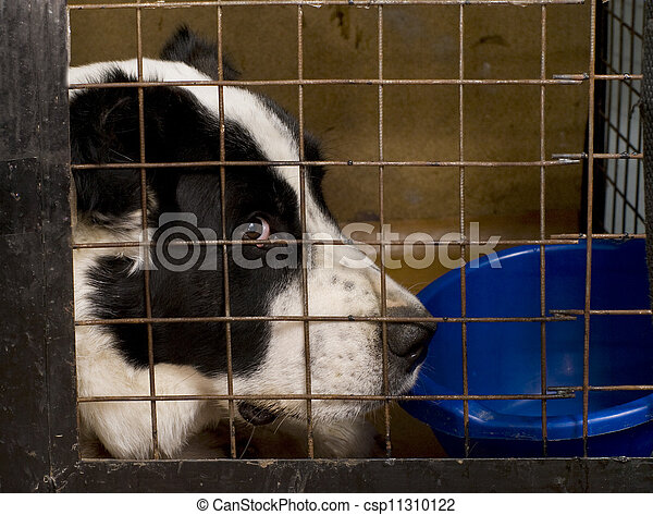 The dog sitting in a cage. - csp11310122