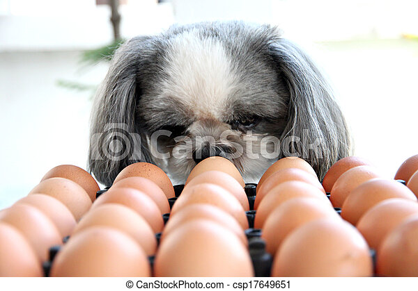 The Dog watching egg. - csp17649651