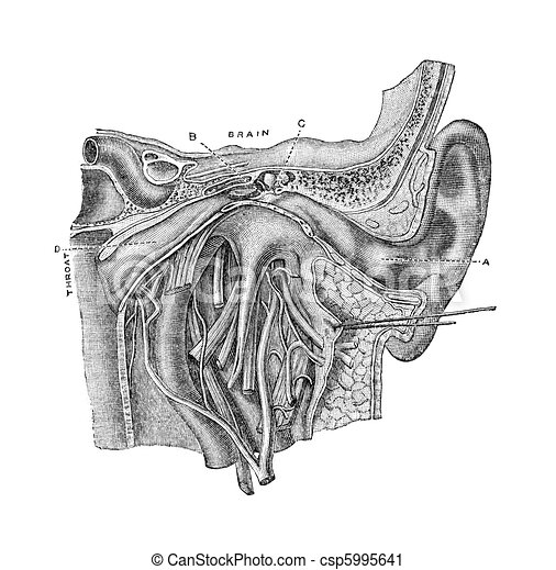 The ear. Anatomy of the human ear. vintage engraving from harper\'s ...