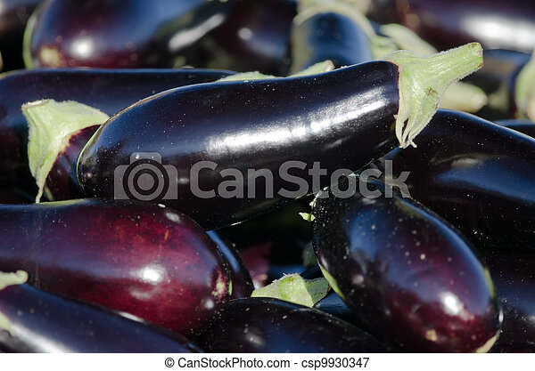 the eggplants - csp9930347