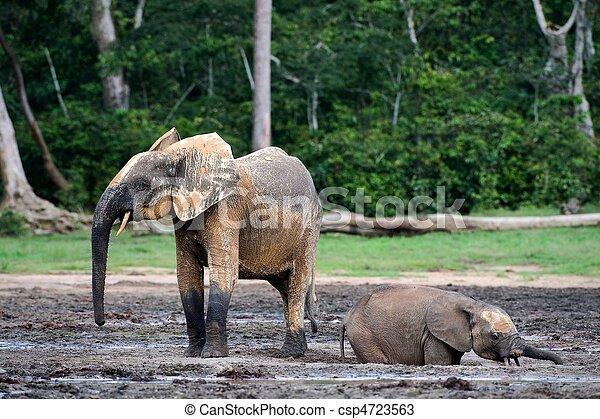The elephant calf bathing in a dirt. Mud baths. - csp4723563