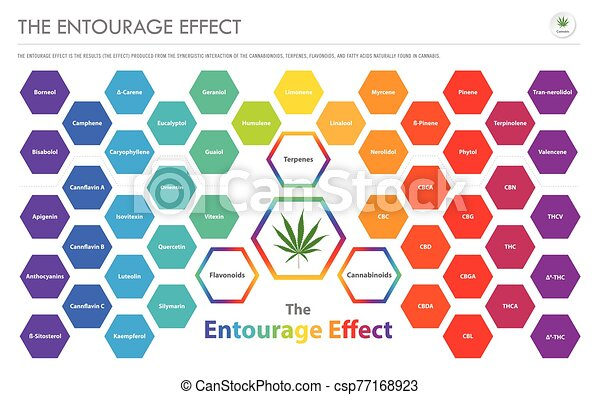The Entourage Effect Overview horizontal business infographic - csp77168923