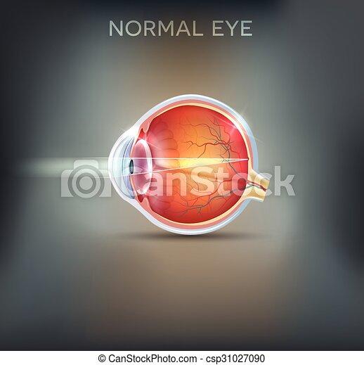 The eye. detailed anatomy, healthy eye illustration on a beautiful ...