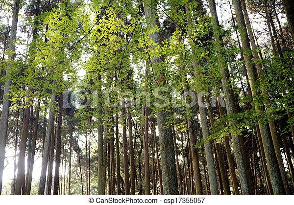 The fall season of Japan - csp17355057
