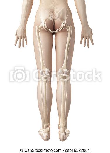 The female leg bones - csp16522084