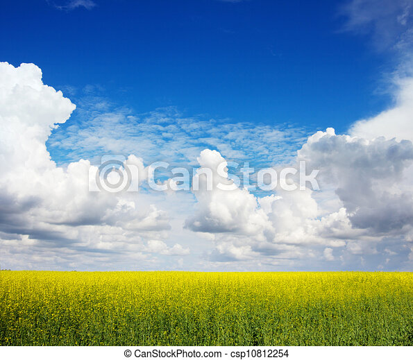 The field of rape flowers and the blue sky - csp10812254