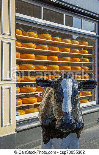 The figure of a cow on the background of the Famous Dutch cheese on the shelves in the store window - csp70055362