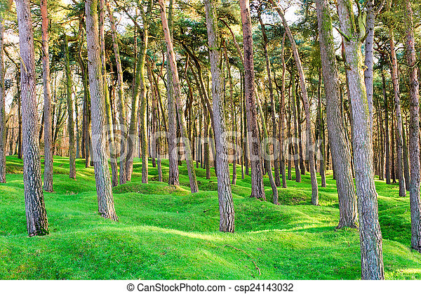 The forest and craters on battlefield of Vimy ridge - csp24143032