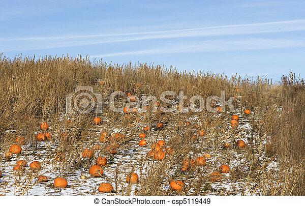 the forgotten pumpkins - csp5119449
