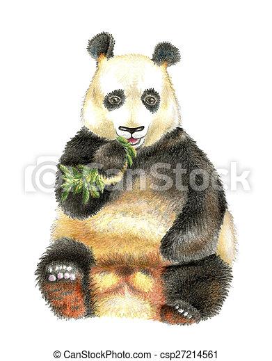 The giant Panda chewing bamboo. - csp27214561