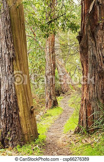 The Grampians Walking Trail - csp66276389
