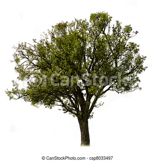 the green tree on a white background - csp8033497