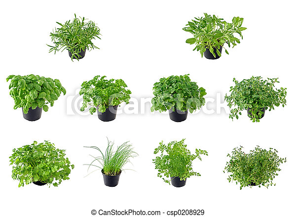 The Herb Collection - csp0208929