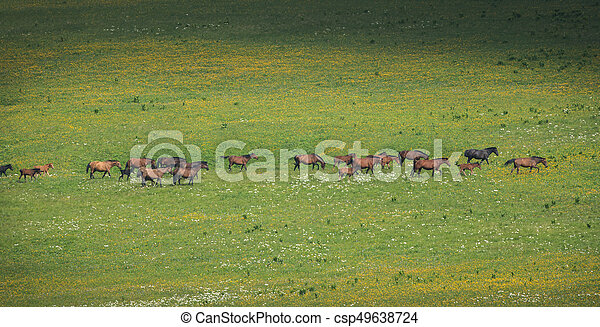 The herd of horses grazes on pasture with green grass - csp49638724