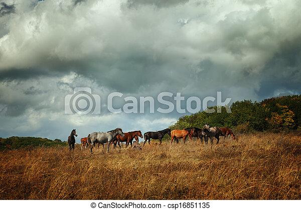 The herd of horses - csp16851135