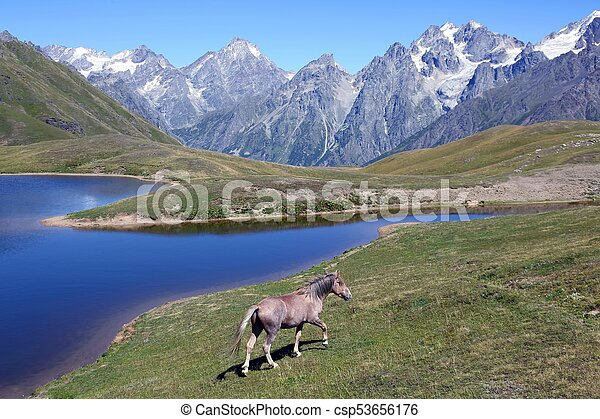 the horse walking on the grass near the lake with mountains - csp53656176