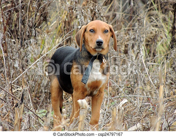 The Hound. - csp24797167