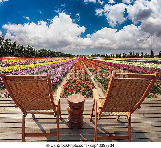 The huge field of flowers - csp43393734