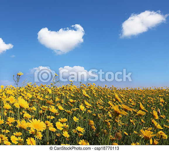 The huge field with big yellow flowers  - csp18770113