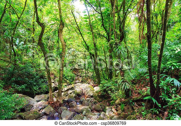 The jungle of El Yunque - csp36809769
