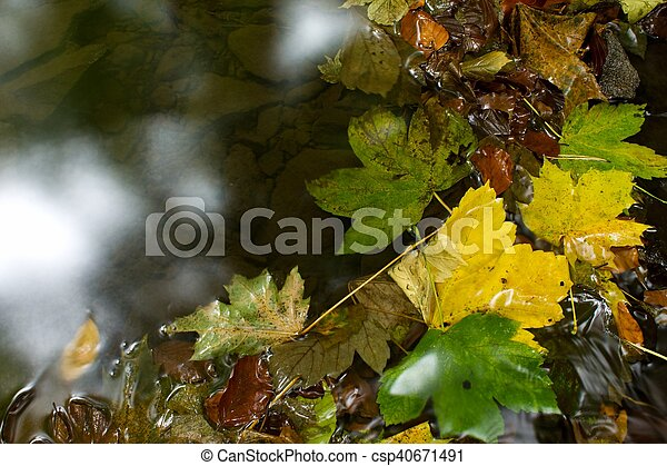 the leaves in the water - csp40671491