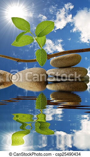 The leaves in the water - csp25490434