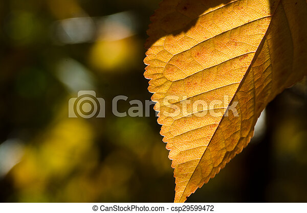 The Leaves of Autumn - csp29599472
