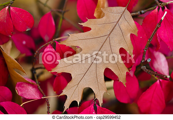 The Leaves of Autumn - csp29599452
