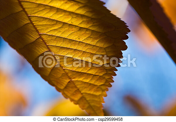 The Leaves of Autumn - csp29599458