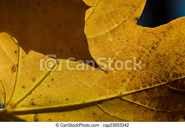 The Leaves of Autumn - csp23653342