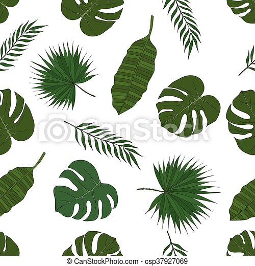 The leaves of the tropical palm trees. Pattern. - csp37927069