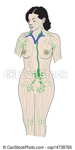 The lymphatic system - csp14738765