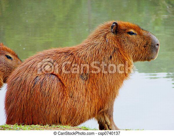 the mammal - csp0740137