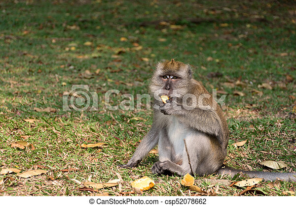 The monkey sits on the ground and eats - csp52078662