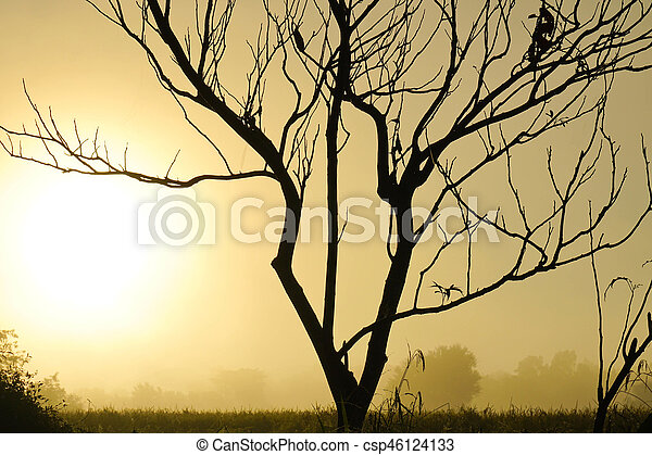 The morning sun silhouettes trees - csp46124133
