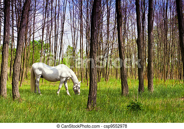 The Most Beautiful Horse In The Woods Horses Grazing In