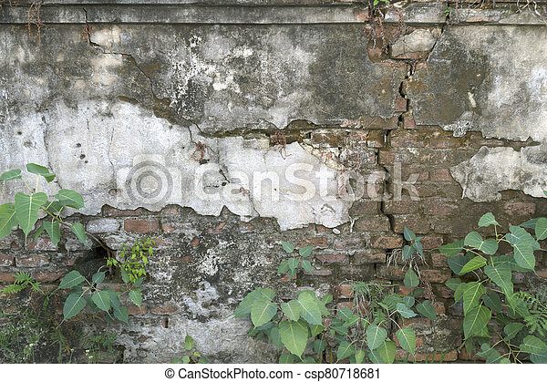 The old cement wall has a small green tree. - csp80718681