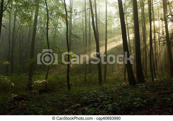 the one tree - csp40693990