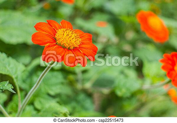 The orange flower in nature - csp22515473