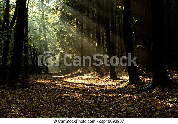the path for nature - csp40693987