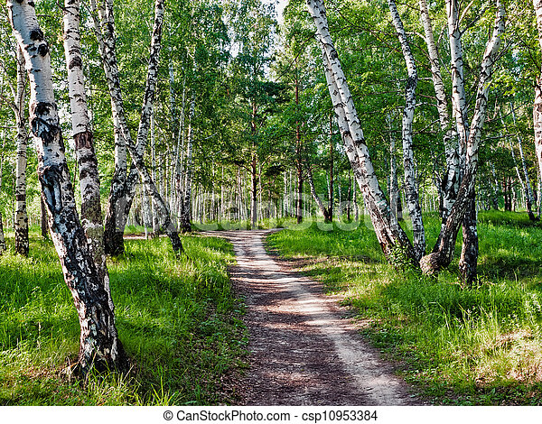 The path in the woods - csp10953384