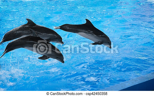 The performance of the dolphins in dolphinariums. - csp42450358
