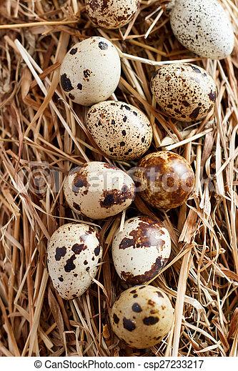 The picture quail eggs - csp27233217