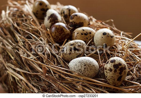 The picture quail eggs - csp27233201