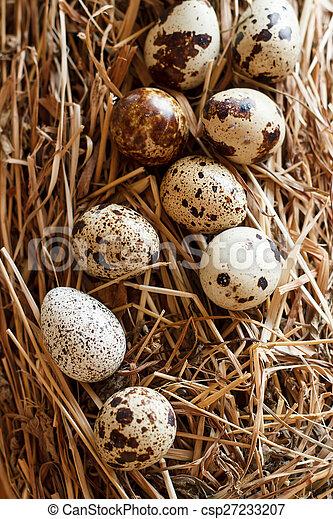 The picture quail eggs - csp27233207