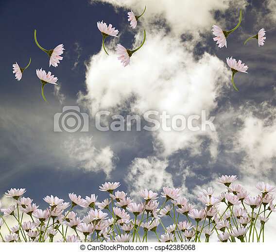 The picturesque bouquet of daisies on a background of blue sky with clouds - csp42385068